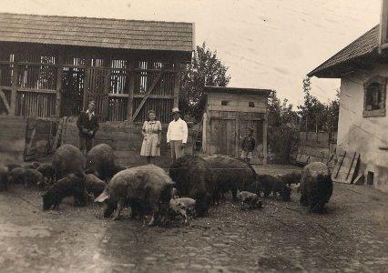 racz_peterne_gazdasagi_udvar_1940